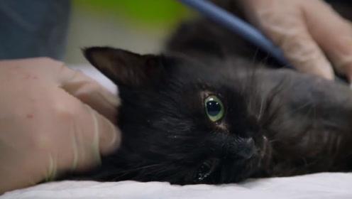 水蛭是害虫吗?放到猫咪受伤的爪子上,仅用25分钟就解毒了