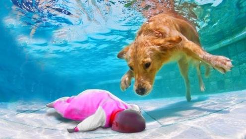 金毛误认为小主人落水,立马跳进水里营救,过程让人热泪盈眶