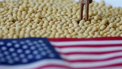 中国采购美国20万吨大豆,此前曾购买万吨美国猪肉