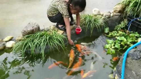 小女孩喂锦鲤,看着让人赏心悦目