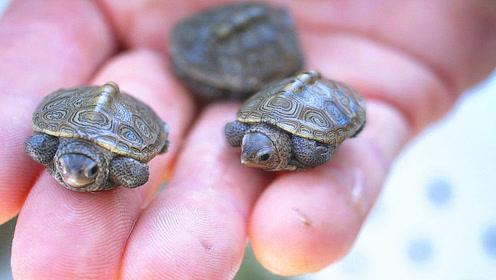 小伙孵化了捡回来的乌龟蛋 专家表示十分罕见