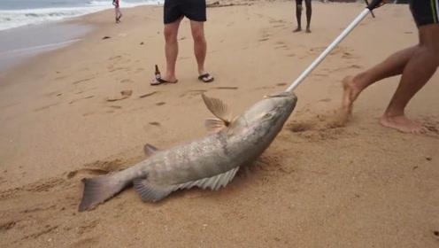 在这钓鱼,抄网都用不到,大鱼被浪就涌到岸上了