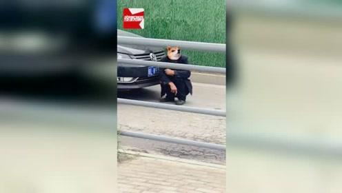 不要命了!安徽一男子街头拦车要钱:不给不放行,被民警劝离