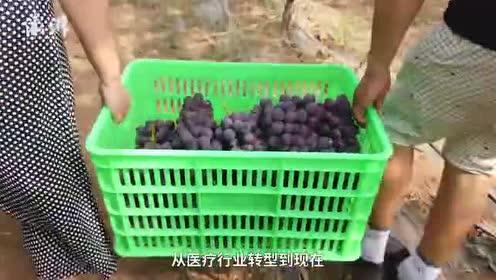 为让孩子吃上放心水果,医生辞职做果农