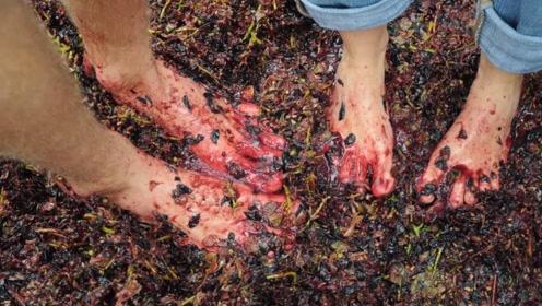 世界顶尖葡萄酒如何酿造的?镜头拍下全过程,看完让人难以接受