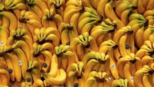 """真正的""""香蕉""""竟早已灭绝?现在吃的香蕉叫什么?网友:长知识了"""