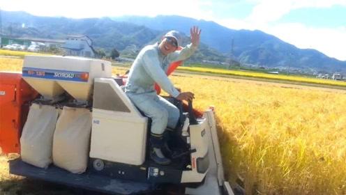 日本造小型水稻收割机,收割打包一应俱全,一天轻松解决21亩地
