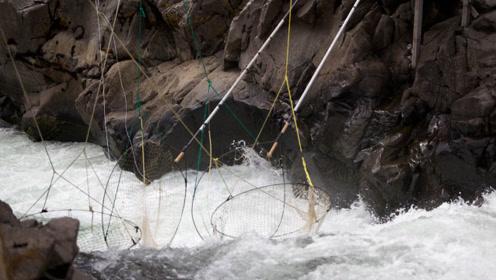 美国农民是怎么捕鱼的?设下天罗地网,大鱼插翅难逃
