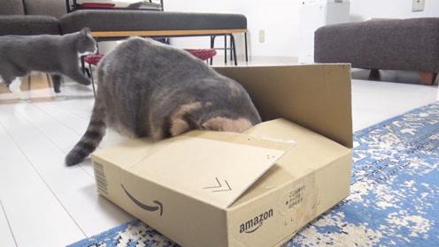 猫咪:不管箱子有多小,挤一挤总能进去的