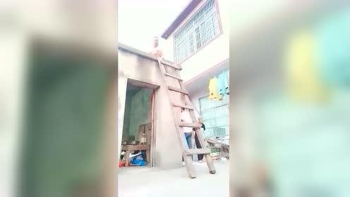 把爷爷的梯子移开,爷爷找不到楼梯了