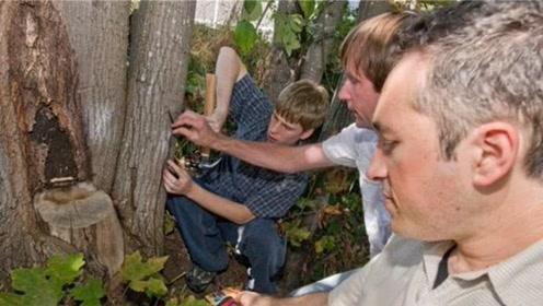 世界上最奇特的树木,居然会发电,千万别碰它
