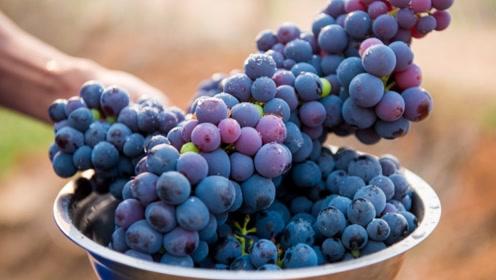 买葡萄时怎么挑甜的?死记这3点,保你买的又甜又新鲜