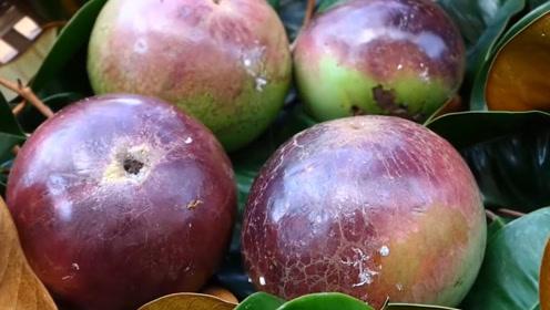 """在国外当绿化的水果,来我国后""""身价暴涨"""",摇身一变成高端水果"""