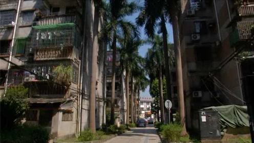 小区要砍500多棵大王椰业主不舍,物业:已砸车百余起