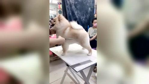 狗狗:老板 稍微修一下