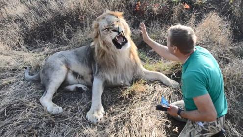 狮子不愿意梳毛,饲养员上去就是一巴掌,结果狮子的反应太搞笑了