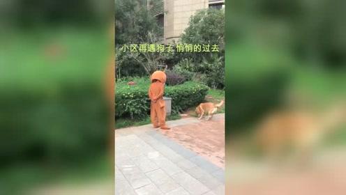 当熊熊遇到狗会发生什么?狗定睛一看又是我,撒腿就跑