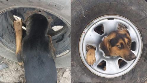狗狗脑袋被卡车胎中心 消防员用凡士林将其救起