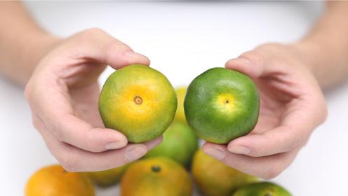 橘子应季上市,学一招挑选甜橘子,一挑一个准,果农方法太实用了