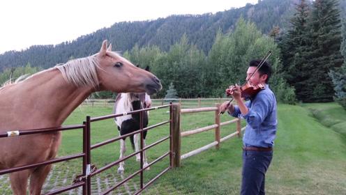 外国小伙心血来潮,对自家马儿拉小提琴,马儿反应让人意外!