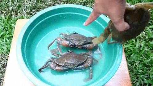 将热蜡倒在螃蟹上,5小时后螃蟹会怎样?网友:碗筷已备好