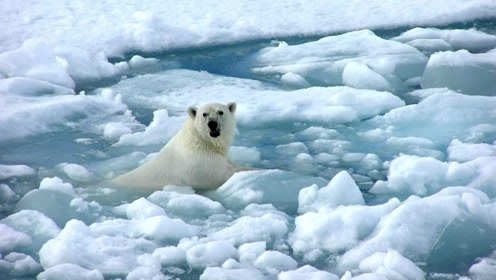 """全球变暖情况到底有多糟糕?科学家:地球只剩11年的""""好日子"""""""