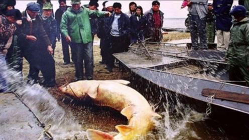 渔民捕到巨型大鱼,本想高价拍卖,不了专家看后惊呼:立刻放生
