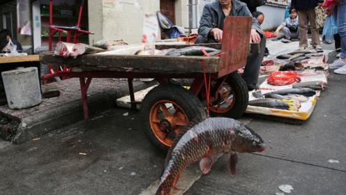 陕南山清水秀,早市上卖的野生鱼很诱人,也不贵
