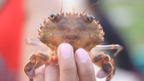 海鲜店老板:这种螃蟹扔了都别吃!国家都禁止贩卖了,别贪便宜!