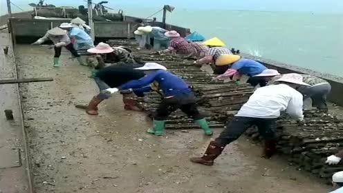 老板真是太暖心了,花50万买的鱼食,请人放到海里去喂鱼!
