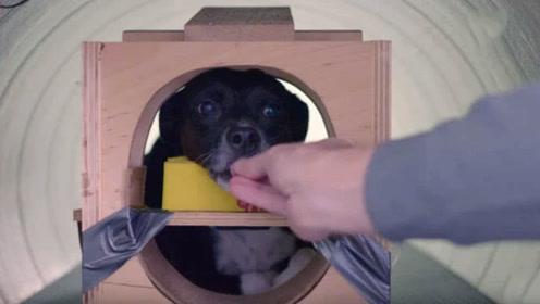 他专门为狗狗做脑部核磁共振 让主人了解汪星人在想什么