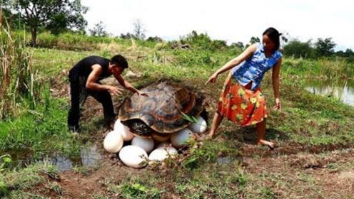 农村夫妻野外觅食探险,找到一个乌龟窝,网友:为什么不放过它!