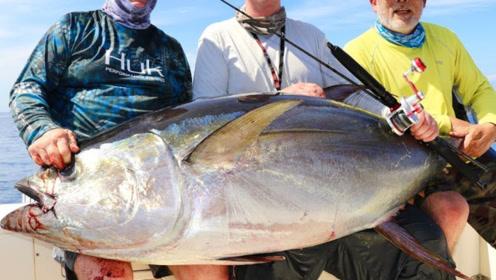 世界上最昂贵的鱼,一条能在北京买套别墅,在日本价格翻倍!