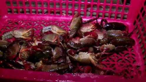 小龙虾到底有多脏?老师傅教你一招快速清洗方法,吃的干净又放心