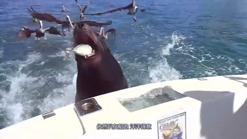 一女子被3头虎鲸包围,场面失控难自救,救助人员干着急!