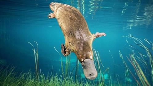 世界上最怪异的动物,身体构造像是一场恶作剧,遇到了千万要小心