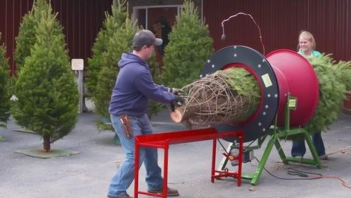 国外松树是怎么不剪枝发快递的?看到树木打包机后,瞬间佩服不已