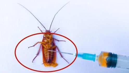 小伙将硫酸注入蟑螂体内,结果惨不忍睹,默默心疼它一秒!