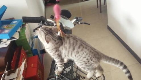 小猫执着电瓶车的味道,不理主人挑逗,主人:猫咪的心思你别猜