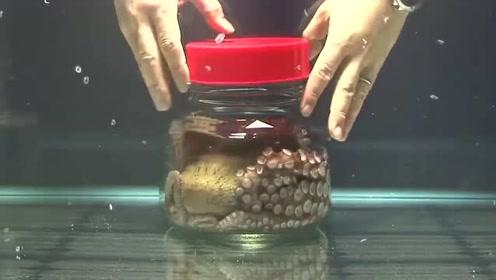 牛人把章鱼放进罐子里,5秒后才是神奇的开始!