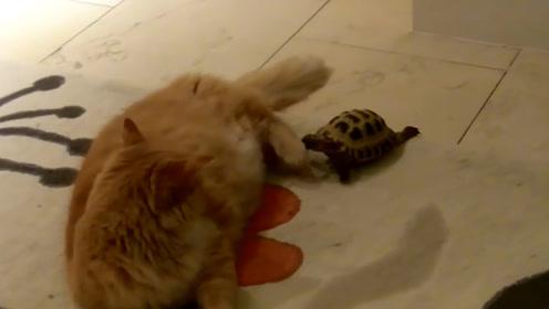 乌龟被1根铁丝勒住头部,美国男子救下后,接下来一幕太感人!
