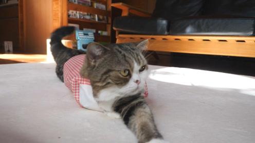 【mugumogu】盒子就在那里,小猫能忍住不钻吗?