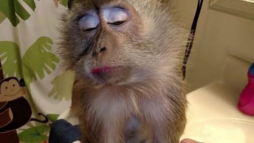 猴子偷偷学化妆,不料被主人当场发现,下一秒忍住别笑!