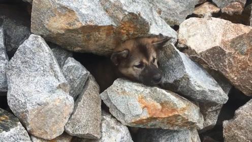 小狗被石头卡住不能动弹,对人类还充满敌意,最后被美女感化