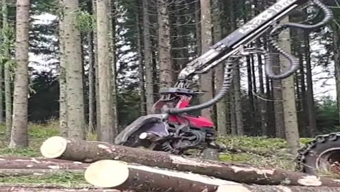 现在的伐木机器真先进,活脱脱一机器手臂,太猛了!