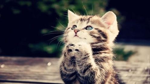 为何农村人去世后,猫咪不可以接近尸体?看完才知有科学依据
