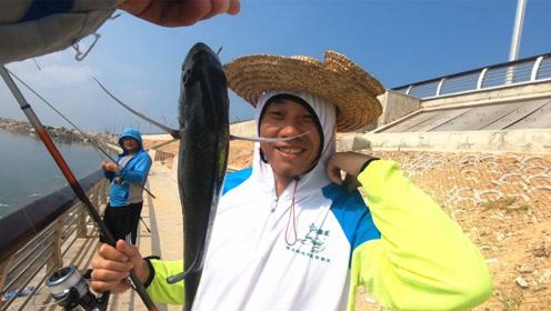今天鱼口太多下饵就吃,阿锋却又被海狼盯上,大鱼直接被抢走一半