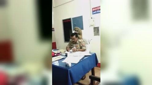猴子帮警察理头发 警察面不改色还工作