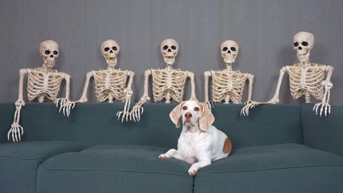 狗子在家看恐怖片,吃饭的时候家中意外全是骷髅,要被吓尿了