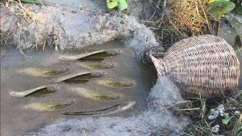 农村小伙将竹篓埋在池塘边,第二天赶来一看,果然有意外惊喜!